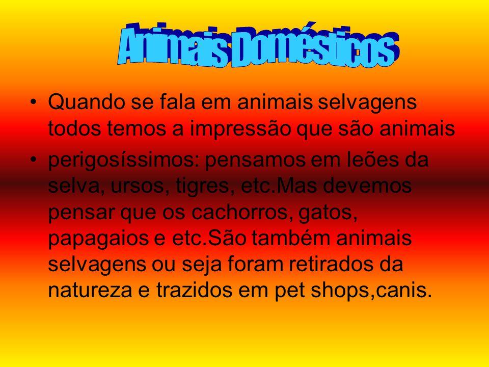 Animais Domésticos Quando se fala em animais selvagens todos temos a impressão que são animais.