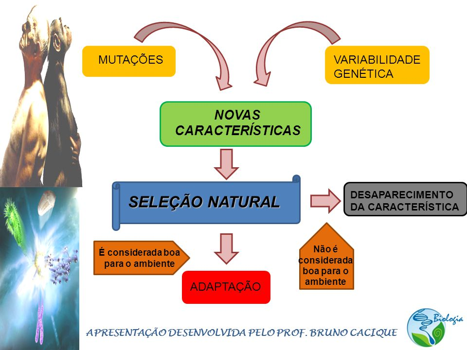SELEÇÃO NATURAL NOVAS CARACTERÍSTICAS MUTAÇÕES VARIABILIDADE GENÉTICA