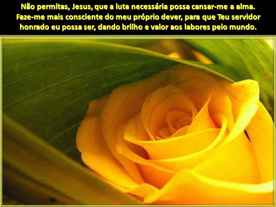 Não permitas, Jesus, que a luta necessária possa cansar-me a alma