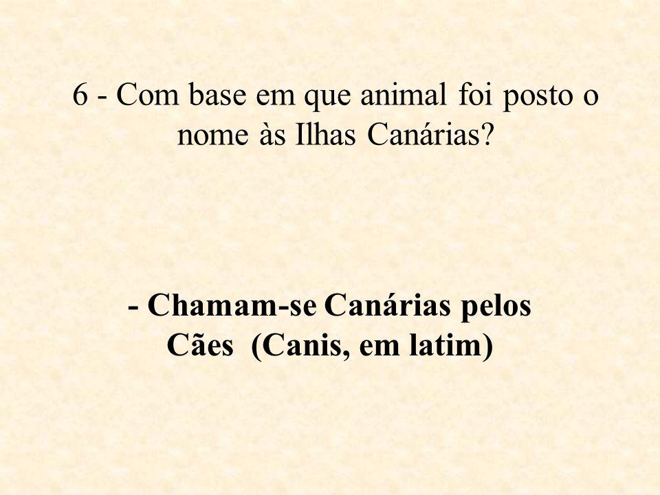 6 - Com base em que animal foi posto o nome às Ilhas Canárias