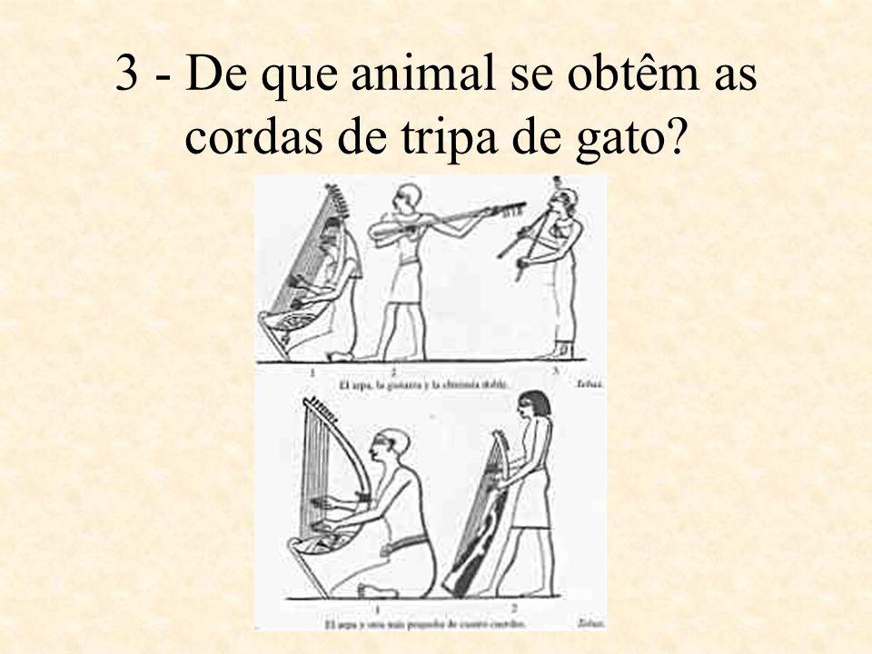 3 - De que animal se obtêm as cordas de tripa de gato