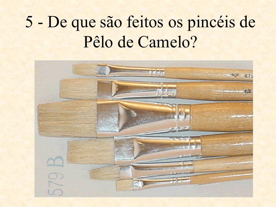 5 - De que são feitos os pincéis de Pêlo de Camelo
