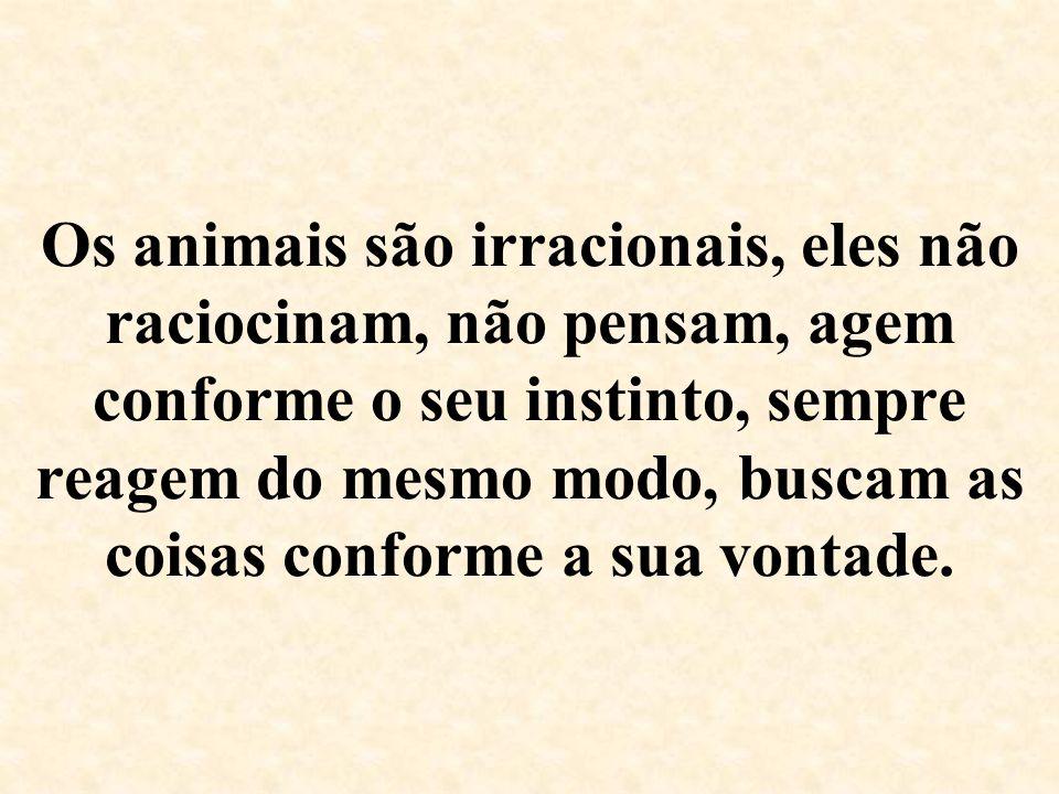 Os animais são irracionais, eles não raciocinam, não pensam, agem conforme o seu instinto, sempre reagem do mesmo modo, buscam as coisas conforme a sua vontade.