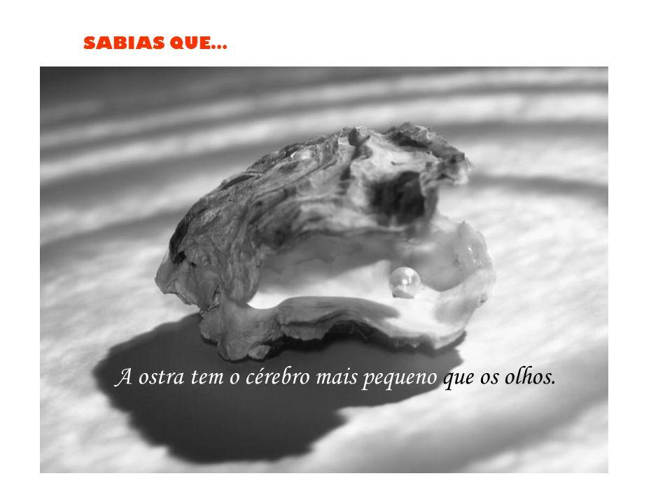 A ostra tem o cérebro mais pequeno que os olhos.