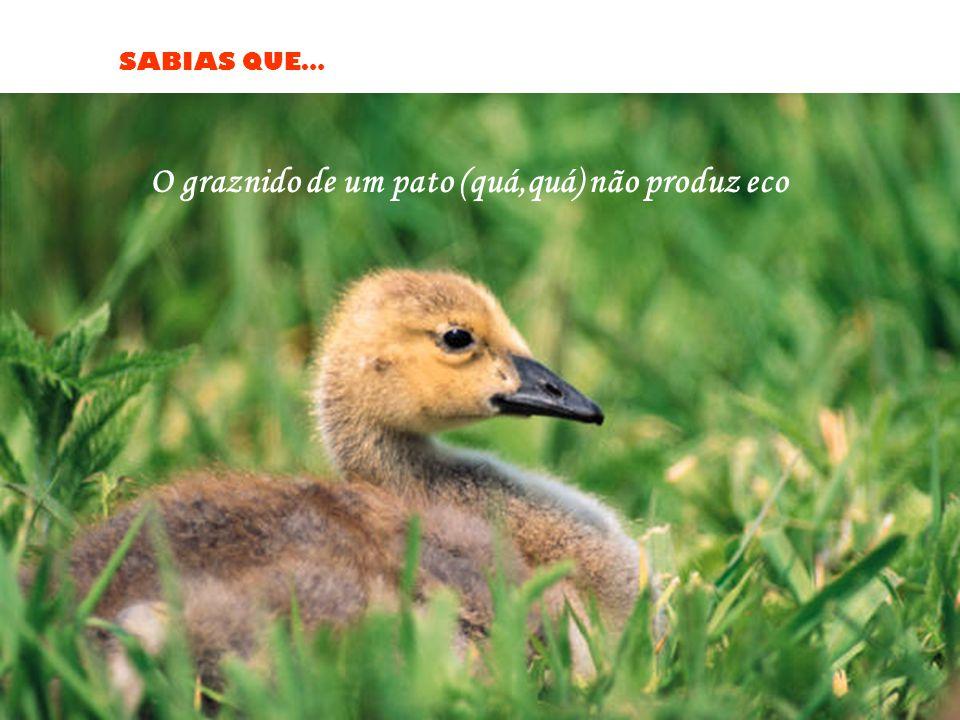 O graznido de um pato (quá,quá) não produz eco