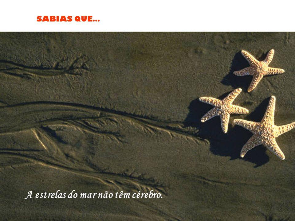 A estrelas do mar não têm cérebro.