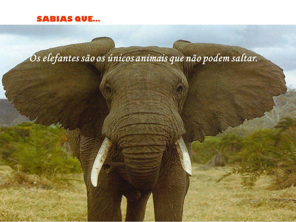 Os elefantes são os únicos animais que não podem saltar.