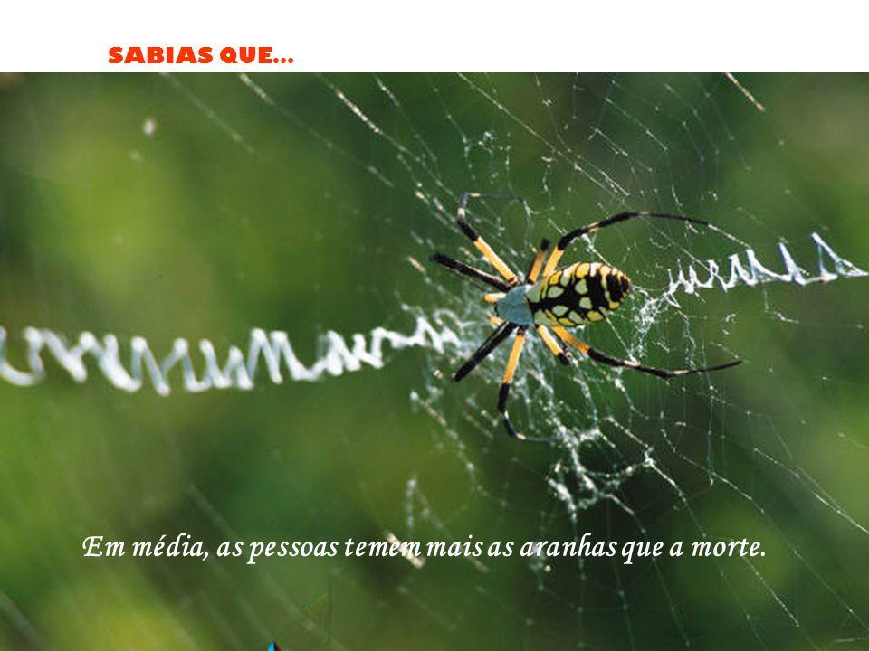 Em média, as pessoas temem mais as aranhas que a morte.