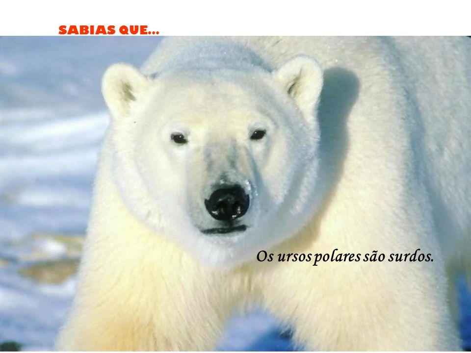 Os ursos polares são surdos.