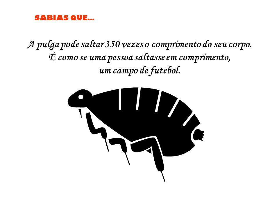 A pulga pode saltar 350 vezes o comprimento do seu corpo.