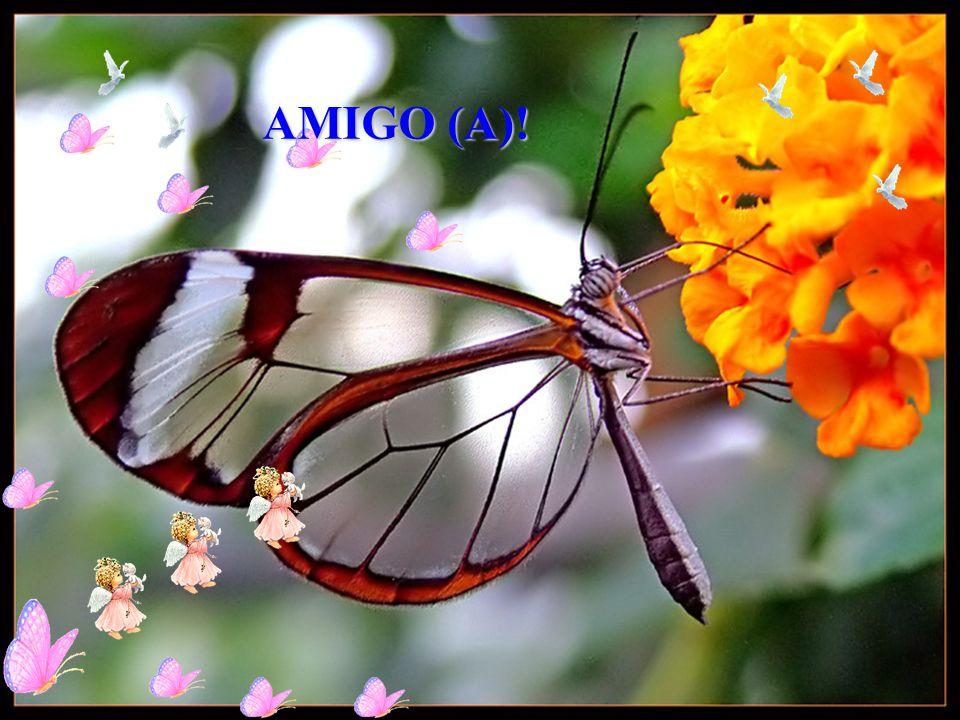 AMIGO (A)!