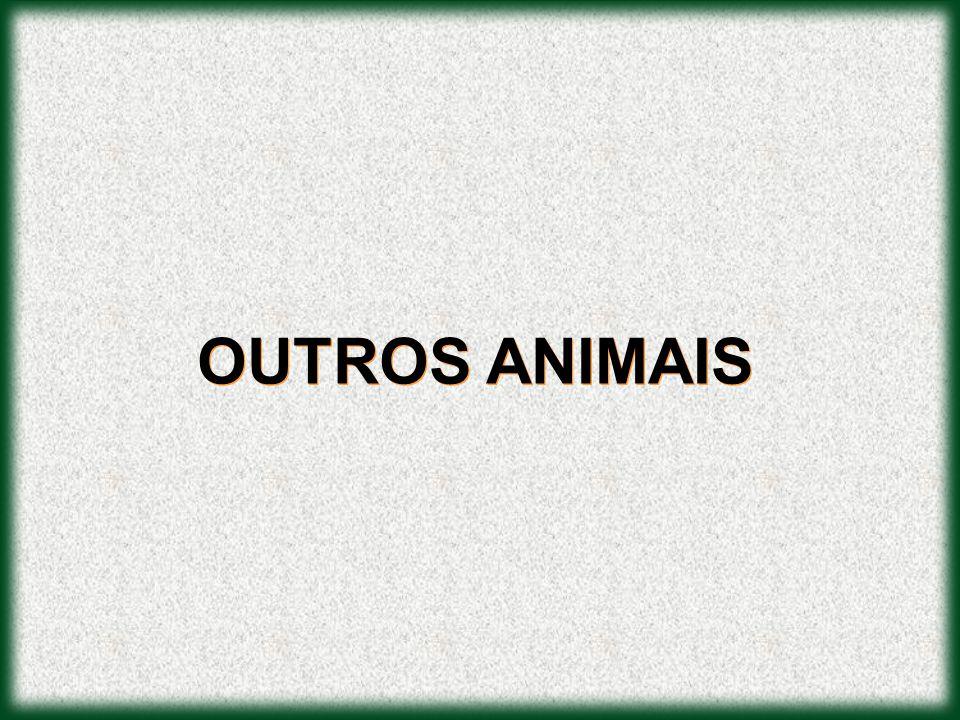 OUTROS ANIMAIS