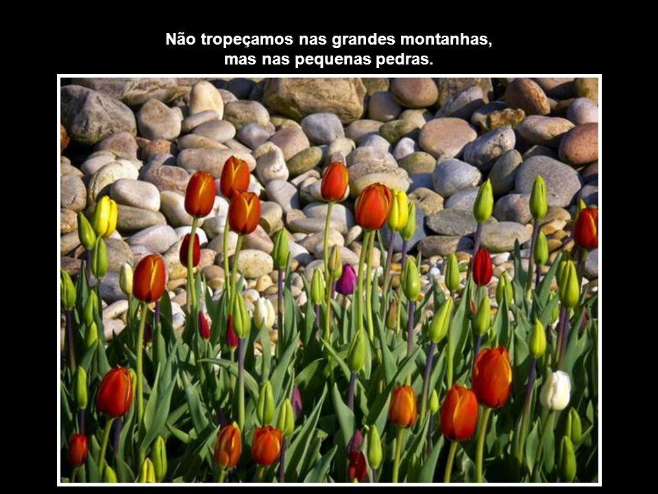 Não tropeçamos nas grandes montanhas, mas nas pequenas pedras.