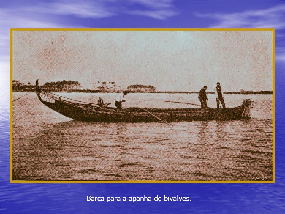 Barca para a apanha de bivalves.