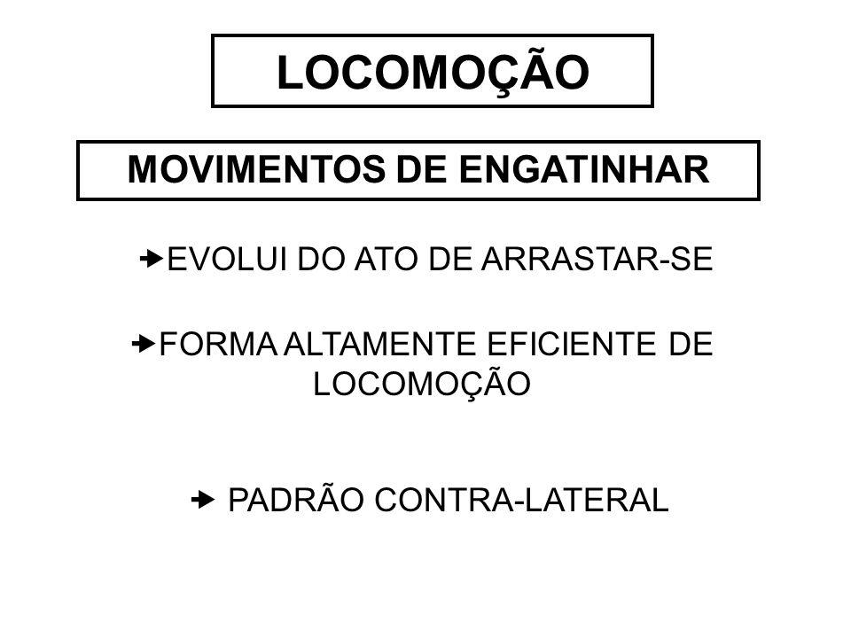 MOVIMENTOS DE ENGATINHAR