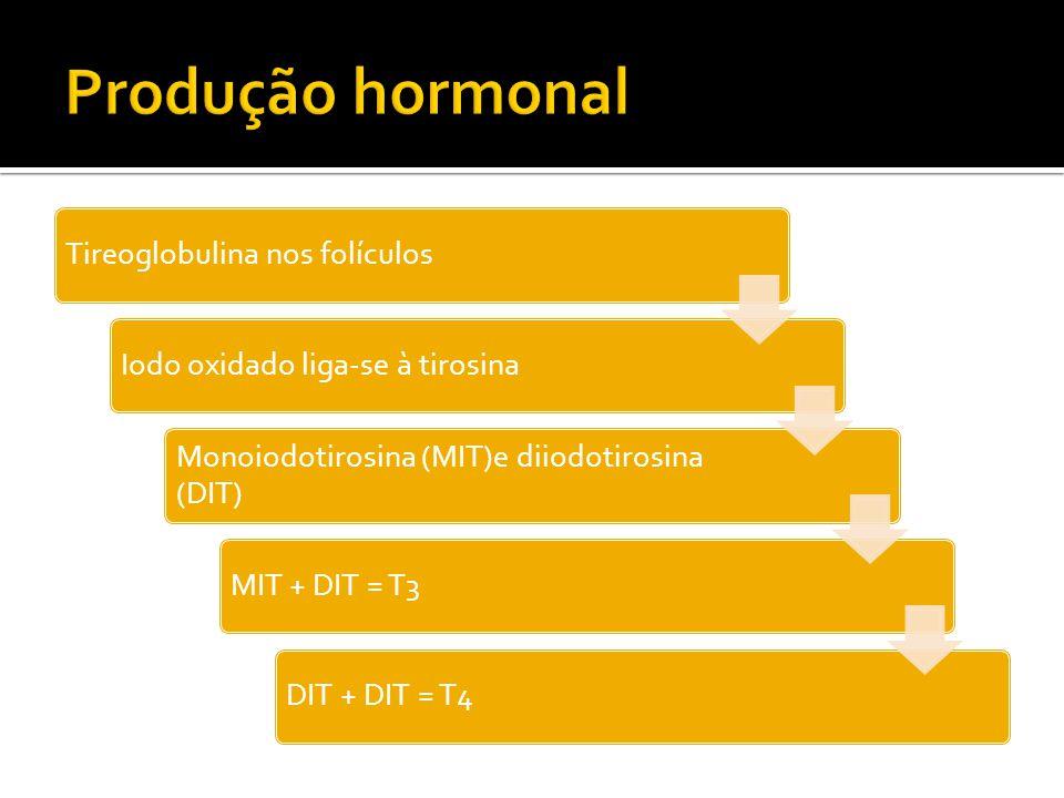 Produção hormonal Tireoglobulina nos folículos