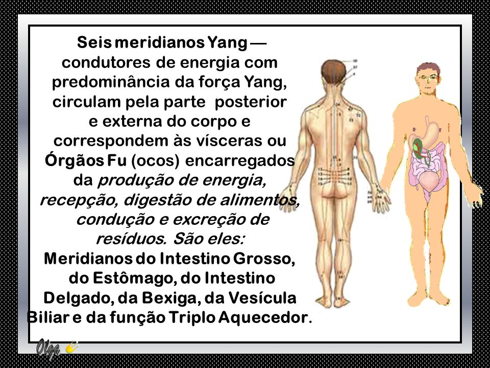 condutores de energia com predominância da força Yang,