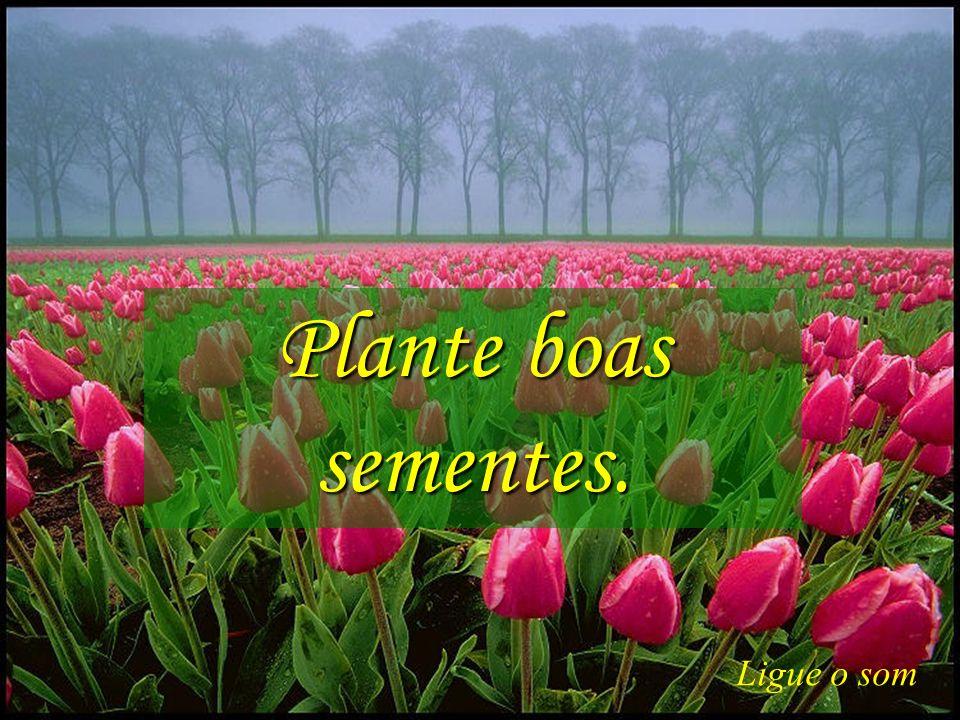 Plante boas sementes. Ligue o som Gps627@superig.com.br