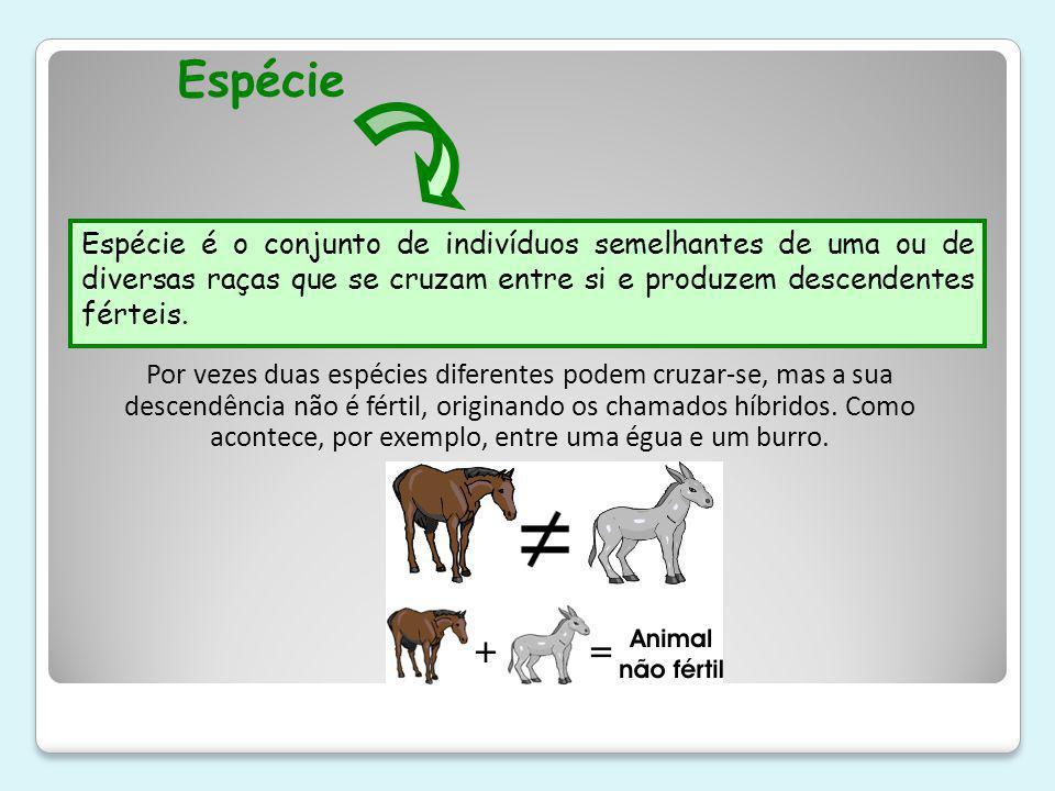 Espécie Espécie é o conjunto de indivíduos semelhantes de uma ou de diversas raças que se cruzam entre si e produzem descendentes férteis.