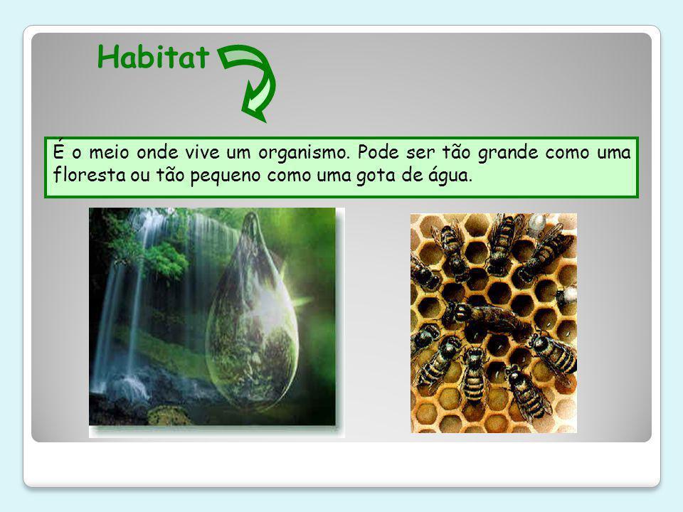 Habitat É o meio onde vive um organismo.