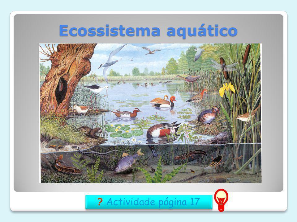 Ecossistema aquático Actividade página 17