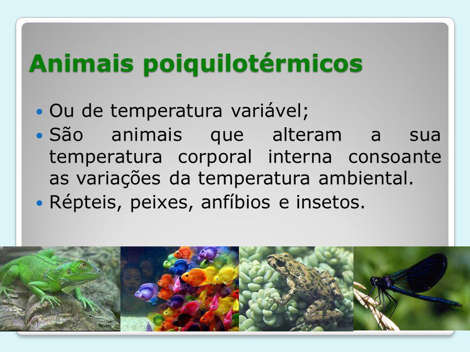 Animais poiquilotérmicos
