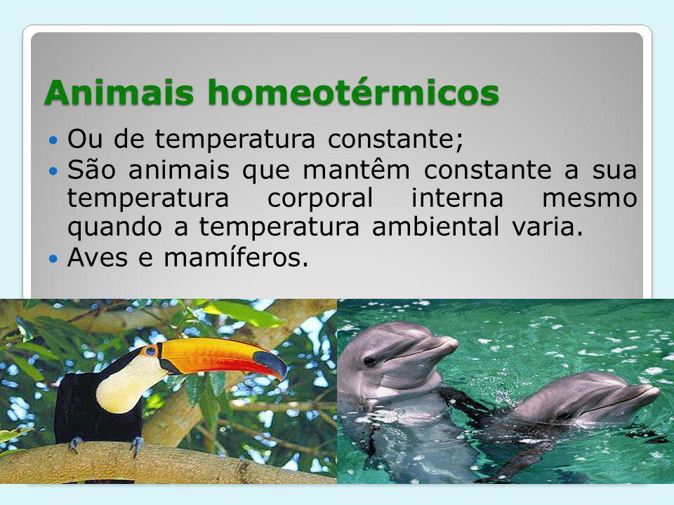 Animais homeotérmicos