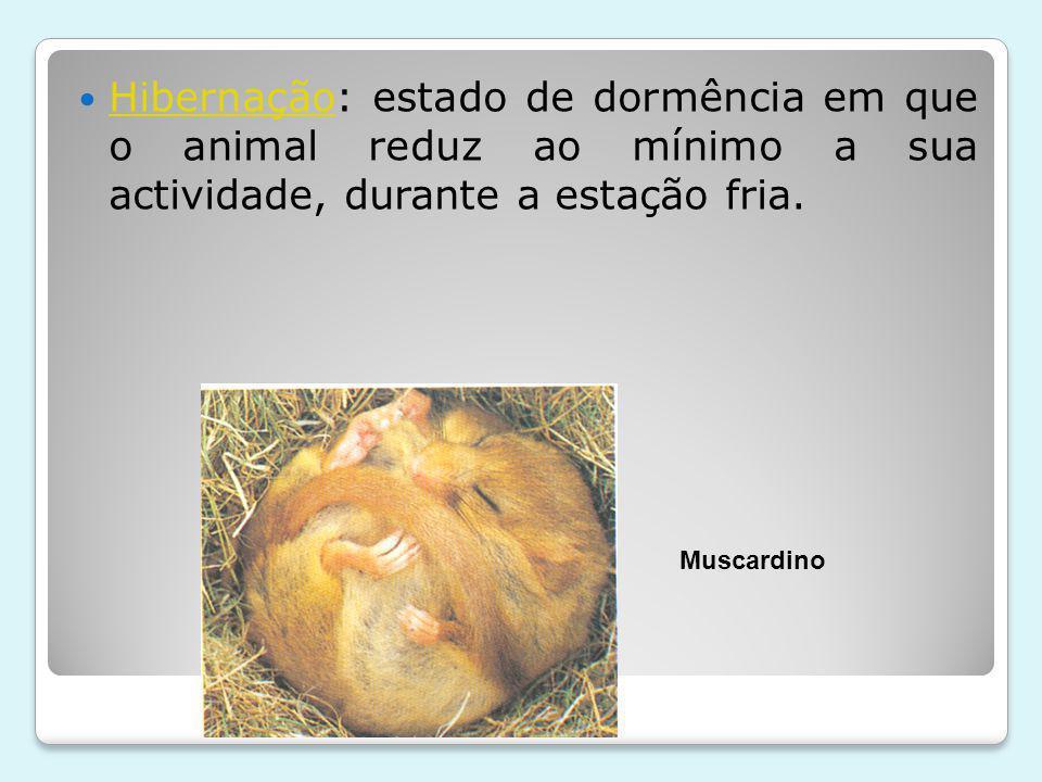 Hibernação: estado de dormência em que o animal reduz ao mínimo a sua actividade, durante a estação fria.