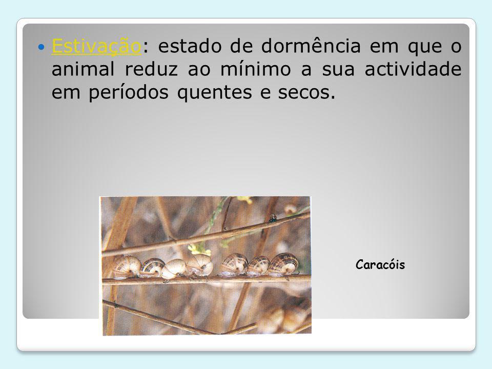Estivação: estado de dormência em que o animal reduz ao mínimo a sua actividade em períodos quentes e secos.