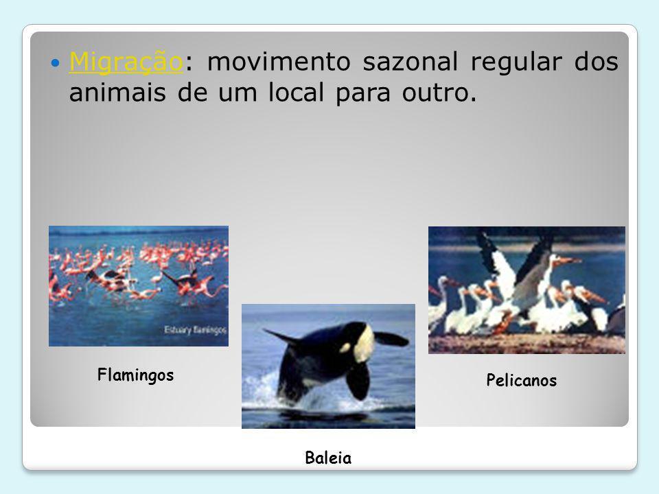 Migração: movimento sazonal regular dos animais de um local para outro.