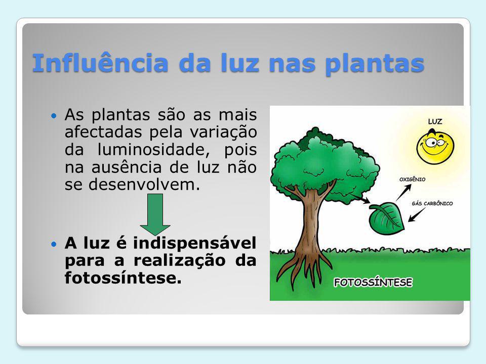 Influência da luz nas plantas