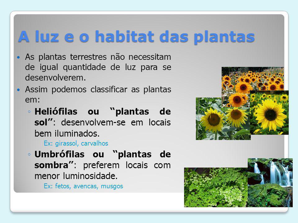 A luz e o habitat das plantas