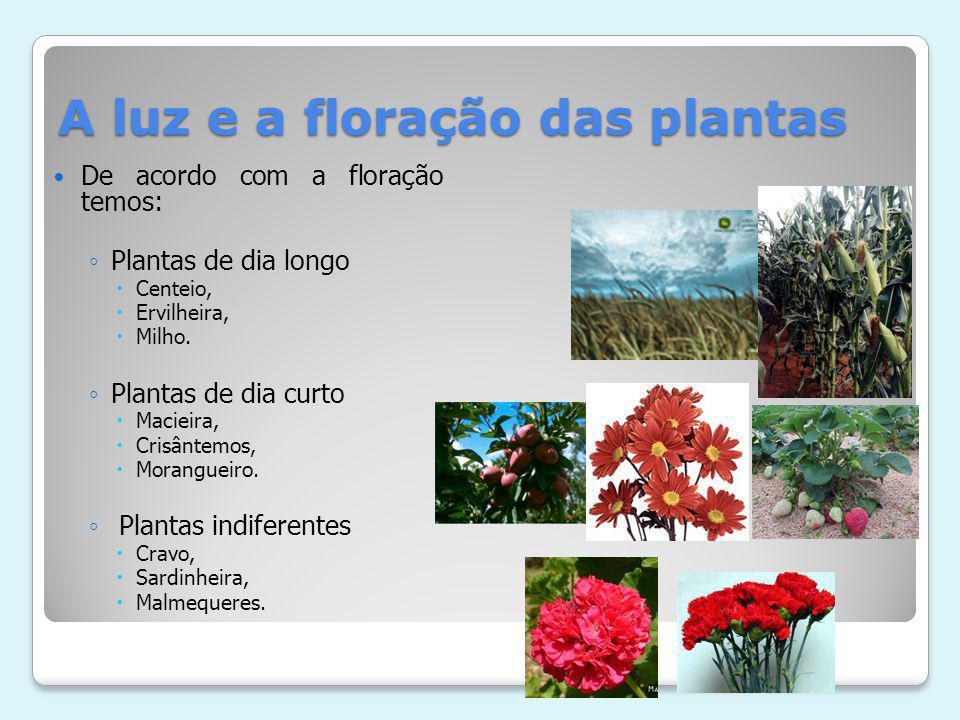 A luz e a floração das plantas