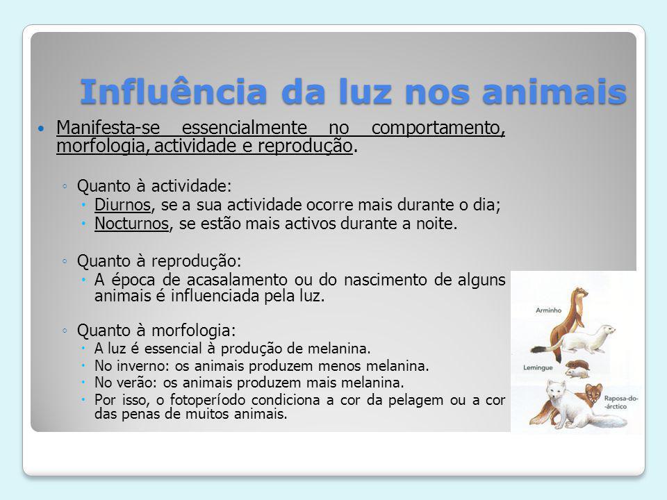Influência da luz nos animais