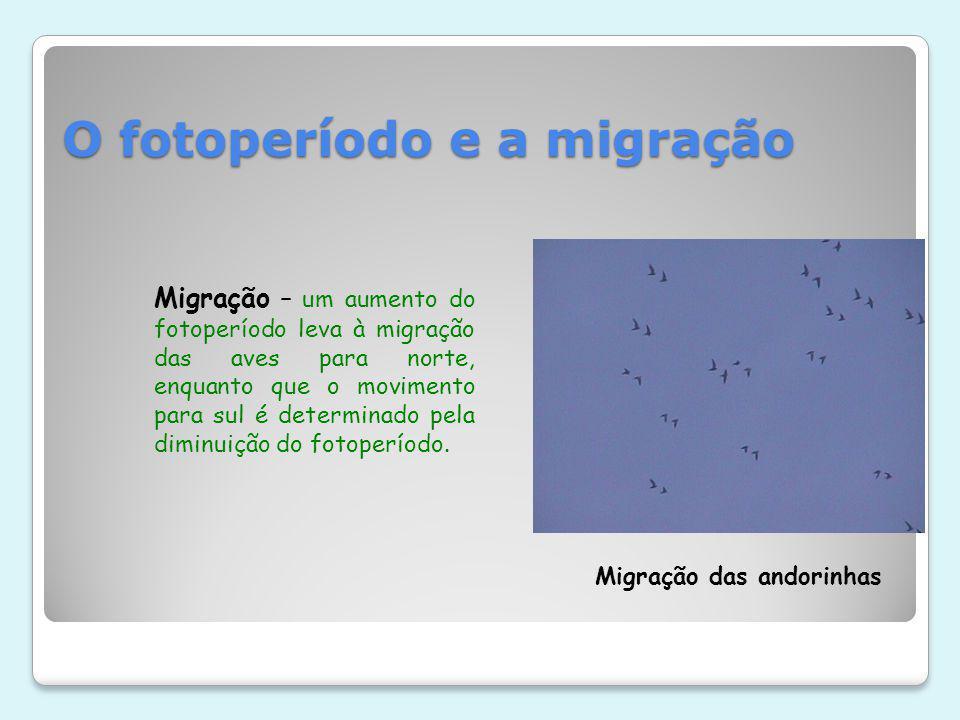 O fotoperíodo e a migração