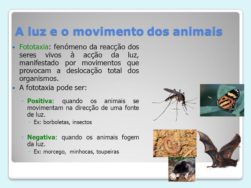 A luz e o movimento dos animais