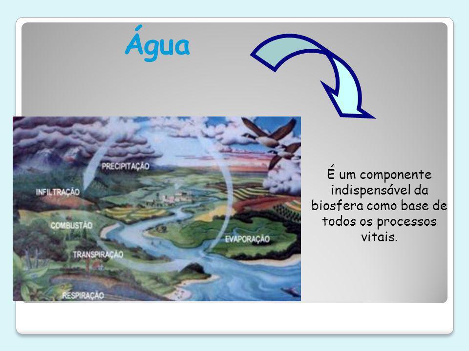 Água É um componente indispensável da biosfera como base de todos os processos vitais.