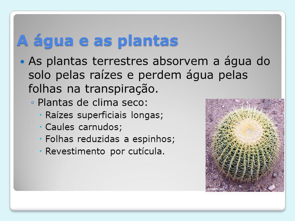 A água e as plantas As plantas terrestres absorvem a água do solo pelas raízes e perdem água pelas folhas na transpiração.