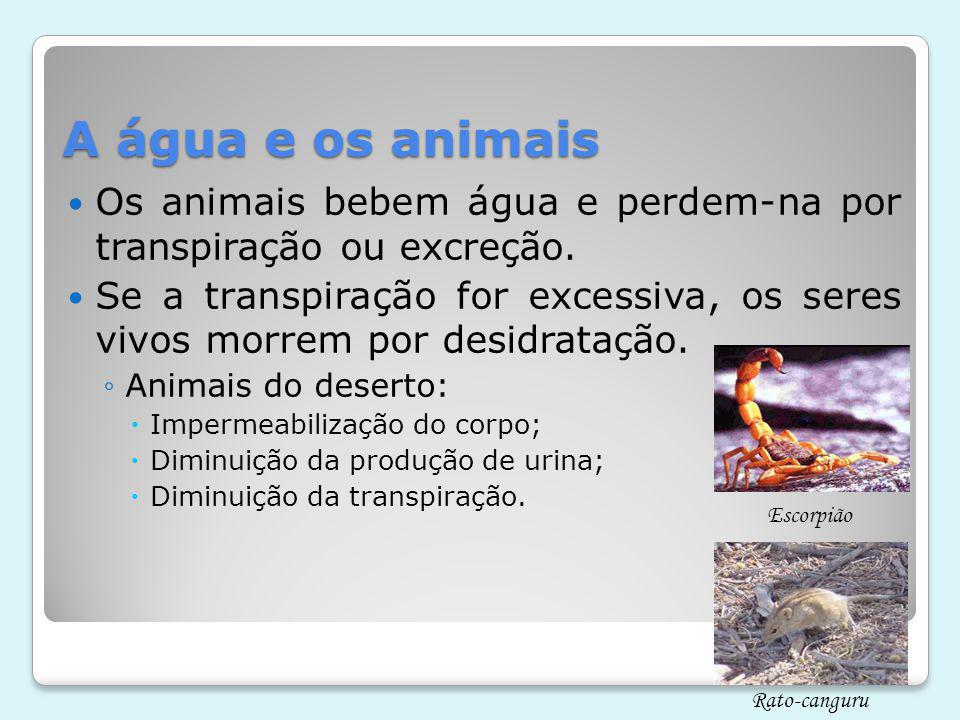 A água e os animais Os animais bebem água e perdem-na por transpiração ou excreção.