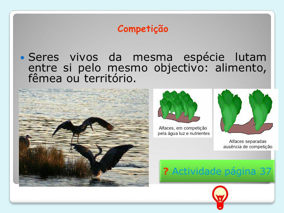 Competição Seres vivos da mesma espécie lutam entre si pelo mesmo objectivo: alimento, fêmea ou território.