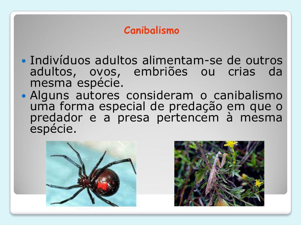 Canibalismo Indivíduos adultos alimentam-se de outros adultos, ovos, embriões ou crias da mesma espécie.