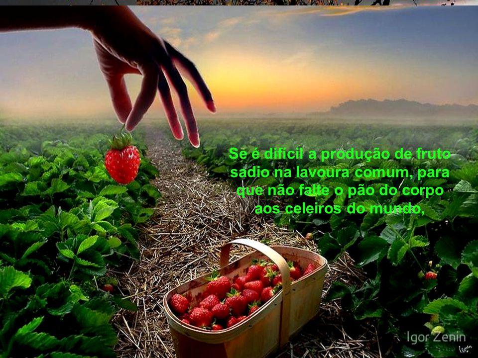 Se é difícil a produção de fruto sadio na lavoura comum, para que não falte o pão do corpo aos celeiros do mundo,