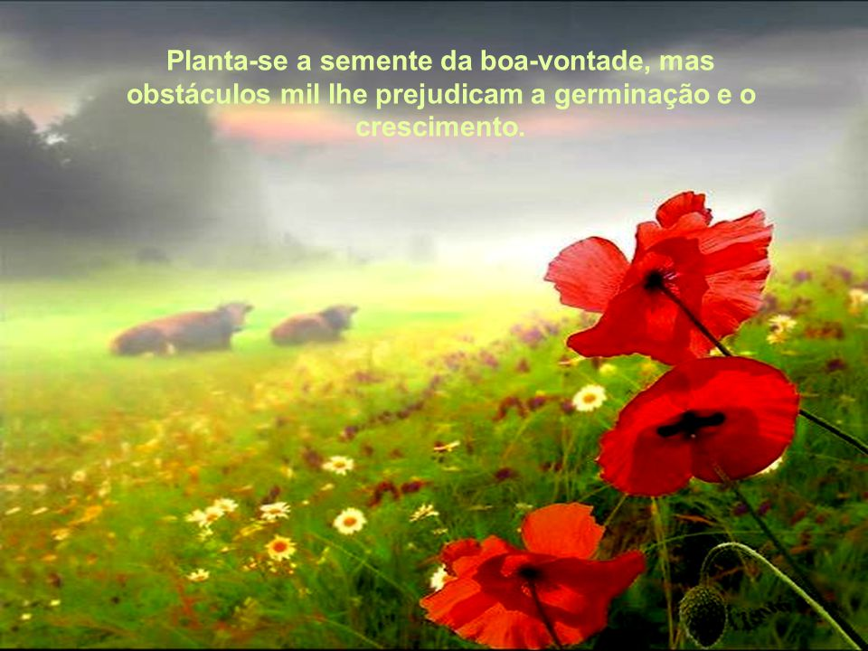 Planta-se a semente da boa-vontade, mas obstáculos mil lhe prejudicam a germinação e o crescimento.