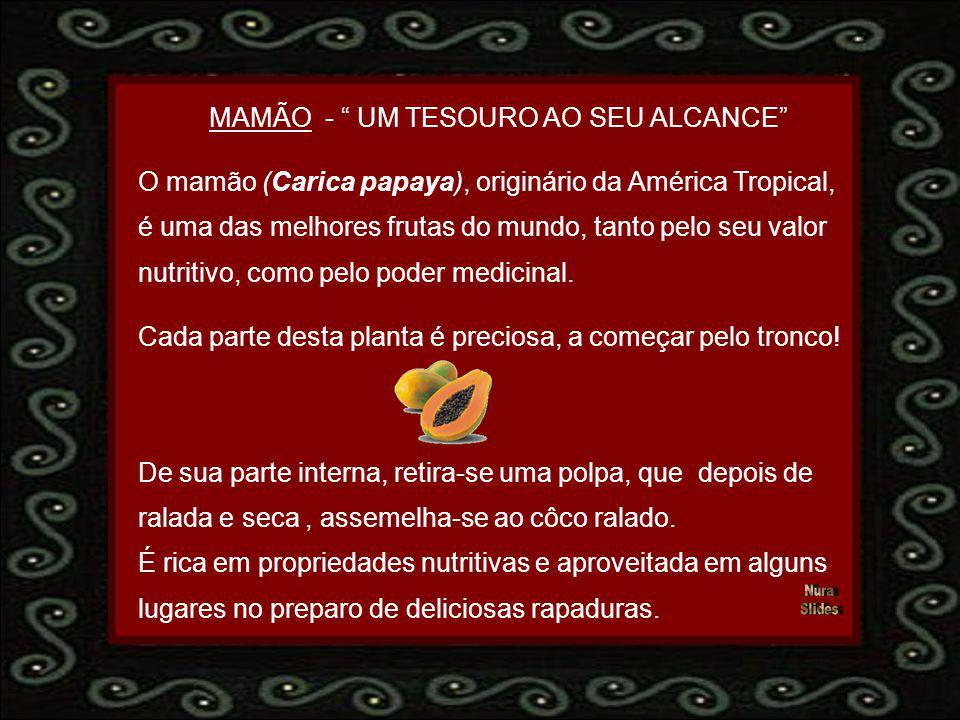 MAMÃO - UM TESOURO AO SEU ALCANCE