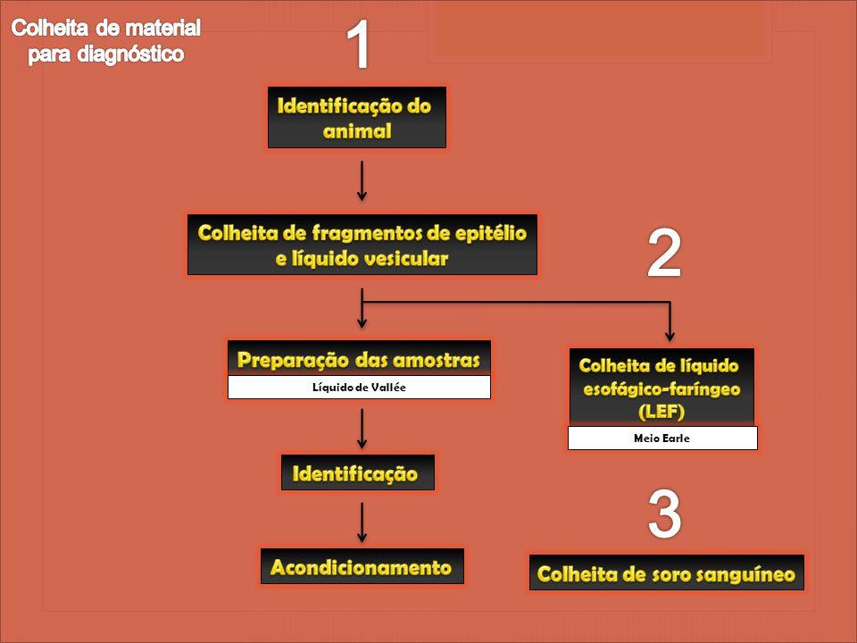 1 2 3 Colheita de material para diagnóstico Identificação do animal