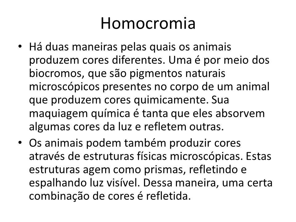 Homocromia