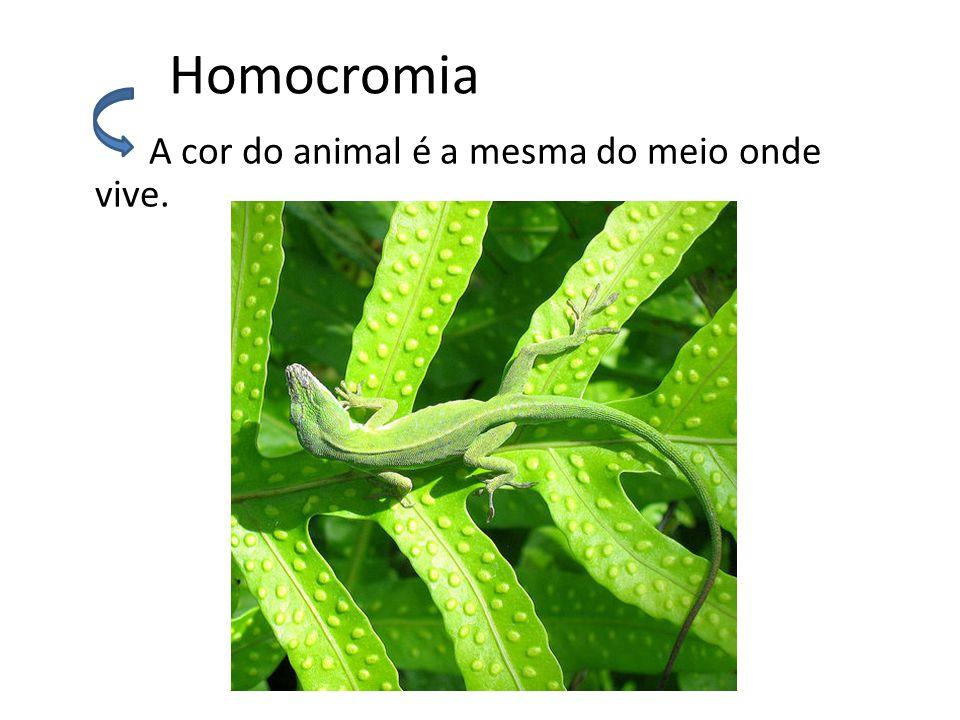 Homocromia A cor do animal é a mesma do meio onde vive.