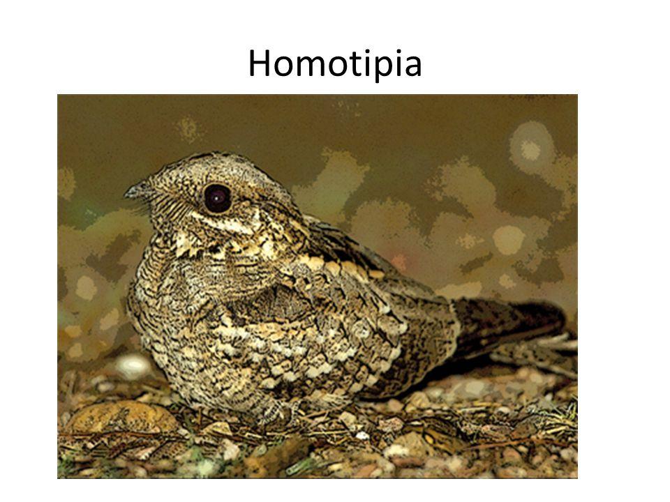 Homotipia