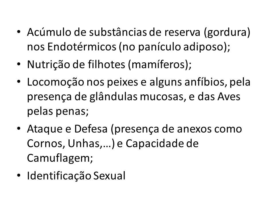 Acúmulo de substâncias de reserva (gordura) nos Endotérmicos (no panículo adiposo);