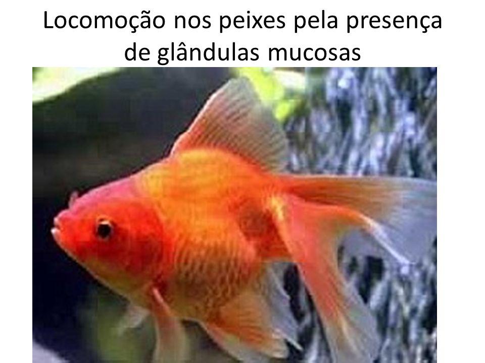 Locomoção nos peixes pela presença de glândulas mucosas
